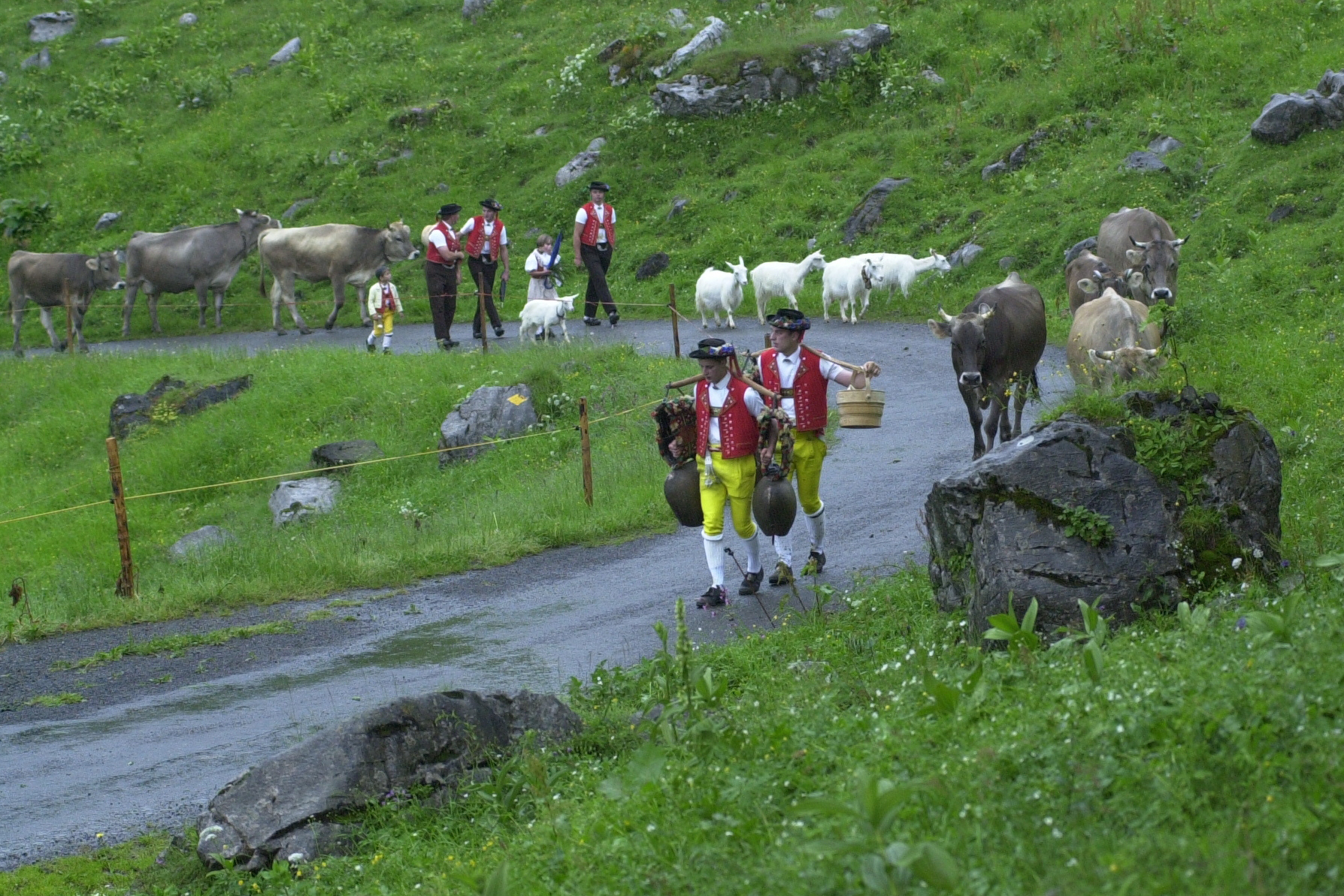 Schwägalp ascent: As soon as the path gets steep, the herdsmen take the large bells from the cows and carry them on sticks across their shoulders, ringing them in time © Hans Hürlemann, Urnäsch, 2001